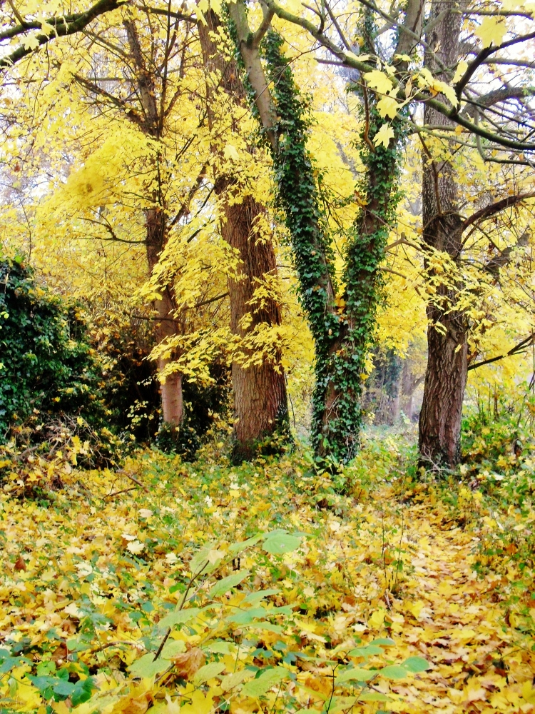 Enid's Inspiration: Bourne End in the Autumn (6/6)