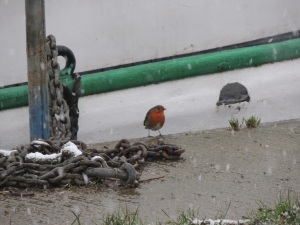 The charming little robin who kindly stood for a picture.