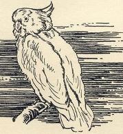 Kiki the parrot of the Adventure Series, drawn by Stuart Tresilian
