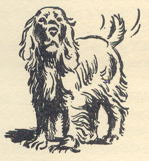 "Scamper drawn by Burgess Sharrocks in ""Secret Seven Mystery"""