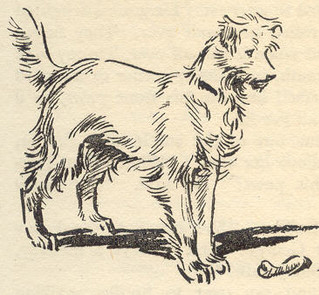 Timmy as drawn by Eileen Soper in Five go to Mystery Moor.