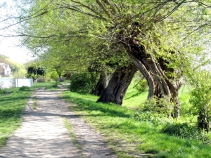 The Cockmarsh walk