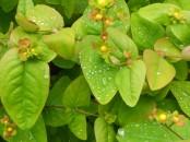 Rain on the leaves