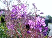 Bee on flowers by Bridgefoot
