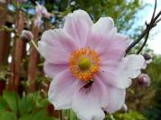 Insect on flower near Bridgefoot
