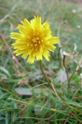 Hawkbit by http://wildaboutbritain.co.uk