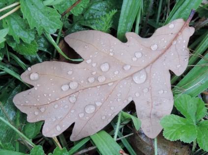Leaf by Loch Rannoch