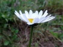 Flower, Bridgefoot