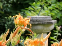 Lillies and sundial