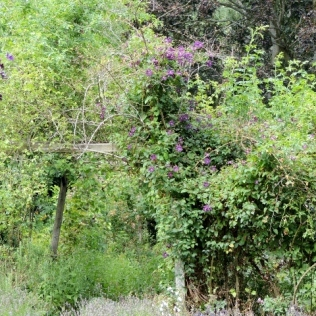 Rose and clematis walk from the lavender terrace