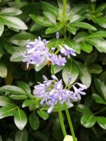 Unknown mauve flower by Stephanie Woods