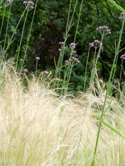 The grasses in the circle garden
