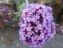 Flowers in Bridgefoot