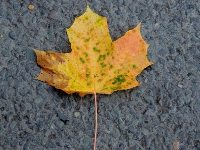 Autumn's on its way! Copyright Stephanie Woods