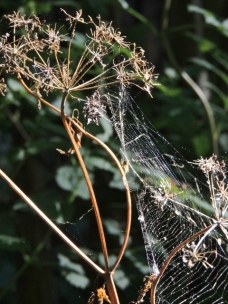 Wincey Spider Copyright Stephanie Woods