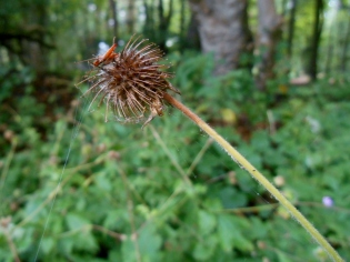 Plant in Backmuir Wood
