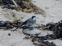 A bird, St Andrews