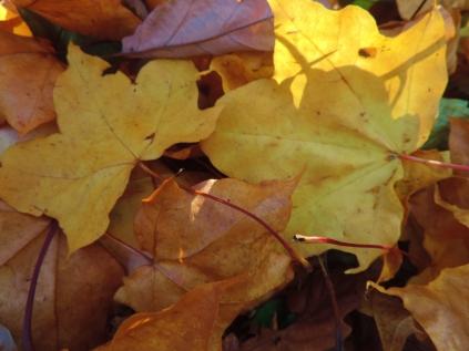 Leaves, Camperdown Wildlife Centre