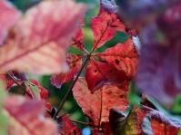 Leaves, Camperdown Park
