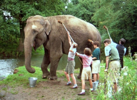 The cast washing an Elephant in Five Go Off to Camp.