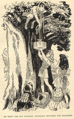 Moving in to the hollow tree