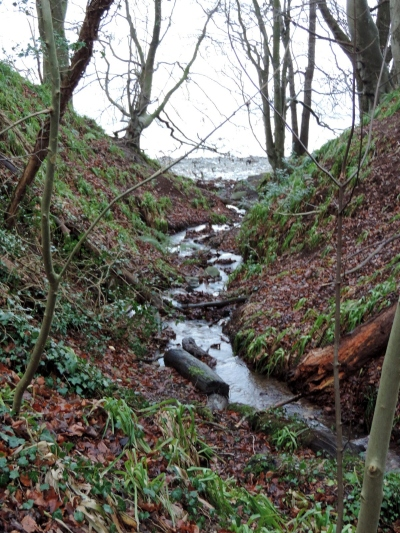 Stream flowing into the river