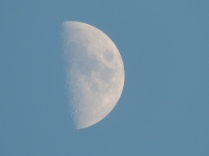 The moon during the day