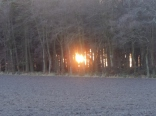 Sun low behind the woods