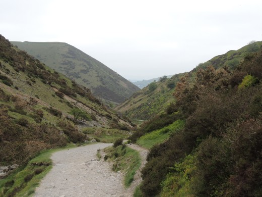 Cardingmill Valley, The Long Mynd, Shropshire June 2013 by Stephanie Woods