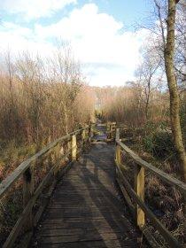 A wooden walkway