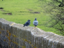 Pigeons on the aqueduct, Fin