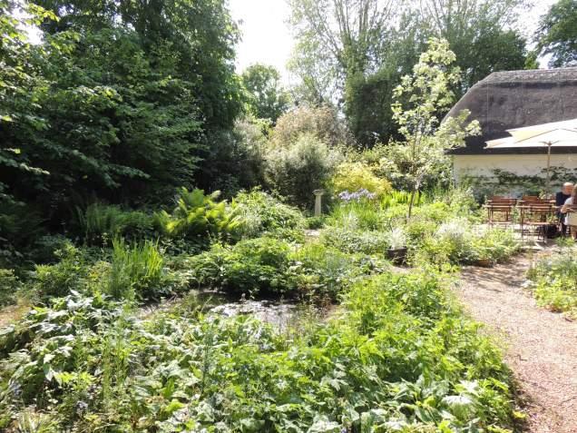 The tea room garden.