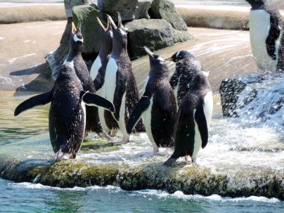 Penguins, Edinburgh Zoo