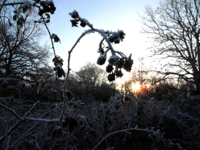 Winters Morning Frost