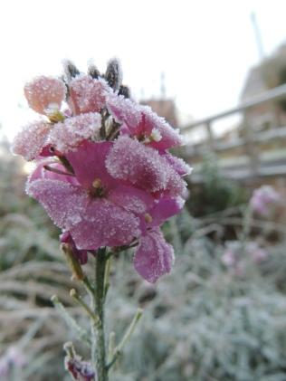 Crystallized flower
