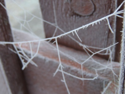Frozen cobweb