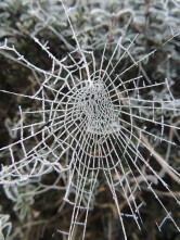 Another frozen web