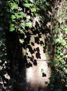 Ivy and shadows