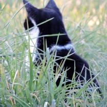Cat, Bridgefoot