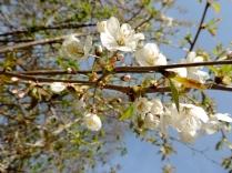 Blossom, Clatto