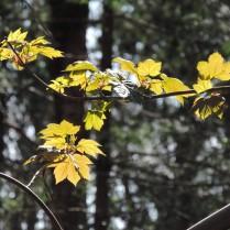 Leaves, Templeton