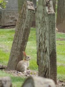 rabbit grave