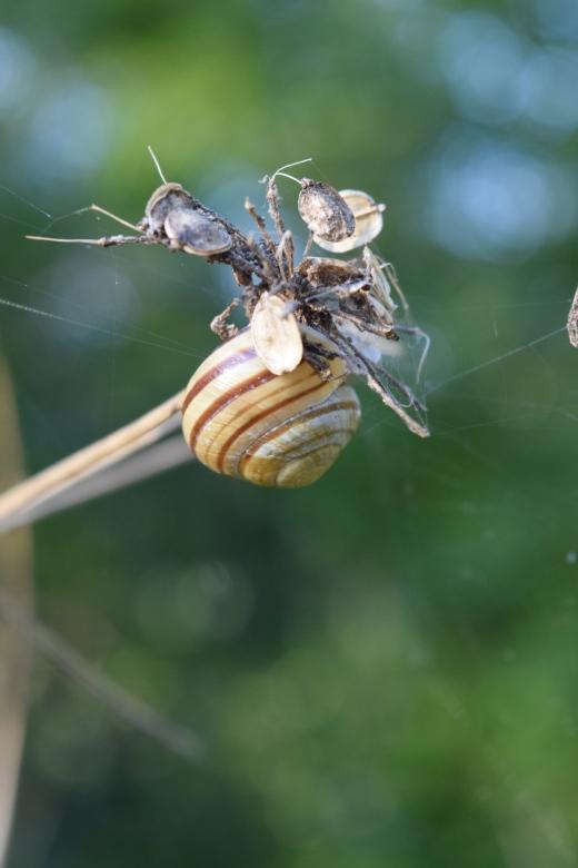 Snail on Dead Flower by Stephanie Woods