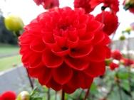 Flower at Drummond Castle
